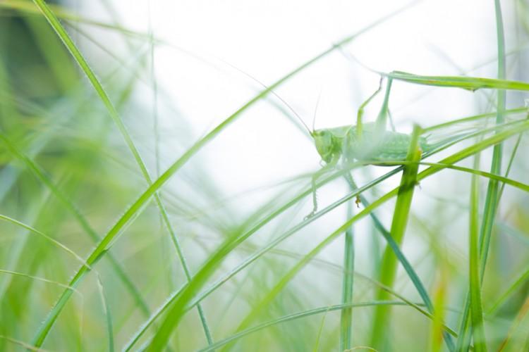 Workshops natuurfotografie - Ontwikkel een grote tuin ...